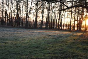 Ostern in der Natur (6)