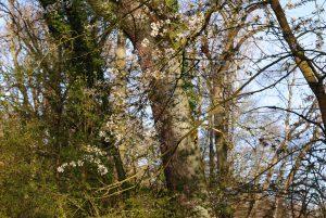 Ostern in der Natur (17)